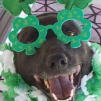 6 Fun Ways to Celebrate St. Patrick's Day with Your Pet