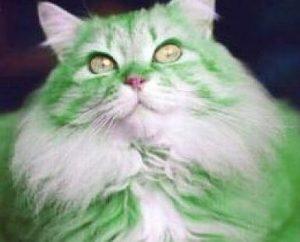st. patrick's day pet cat