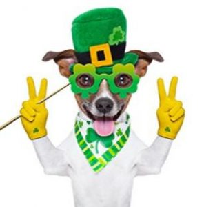 st patricks day  pet photo booth