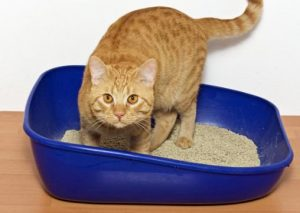 cat pees in dirty litter box