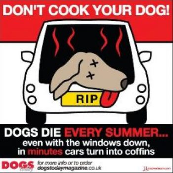 Don't Bake Your Dog (Dogs In Hot Cars)