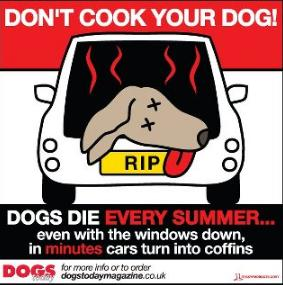 don't cook your dog, dogs in hot cars