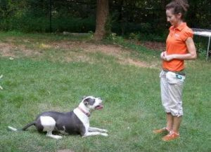 dog training career opportunities