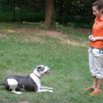 4 Simple Tips to Sharpen Your Dog's Basic Commands