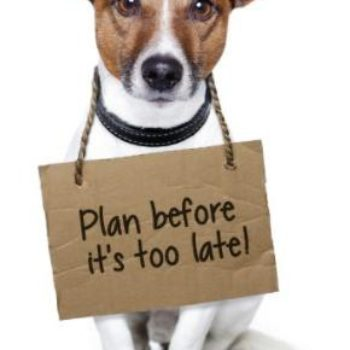 Pet Disaster Preparedness