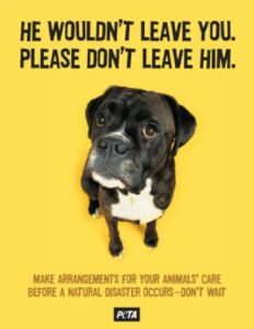 Pet Disaster Preparedness don't leave him