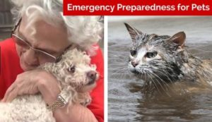 Pet Disaster Preparedness pets