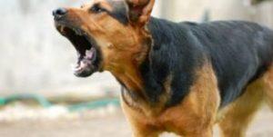 fearful dog fights