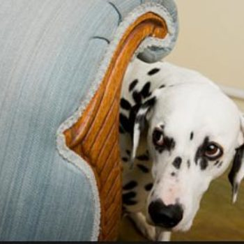 Helping Your Fearful Dog Gain Confidence