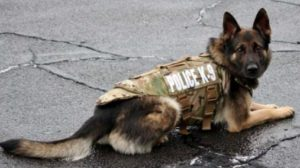 dog training follow through police dog