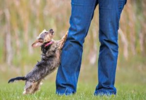 dog training follow through