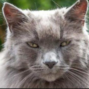 Senior Cats Special Needs