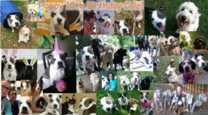 Good Dog! Coaching & Pet Care