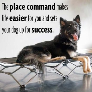 basic obedience foundation work place command