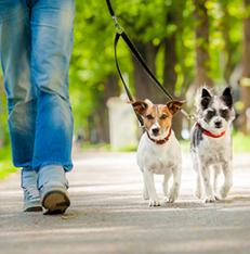 dog walker for shy dogs