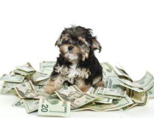 dog food saving