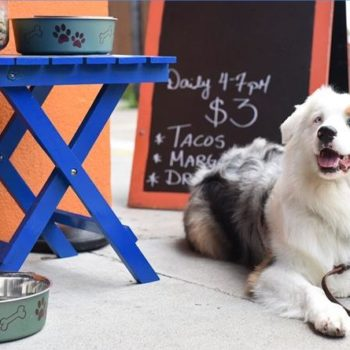 Bring Fido dog friendly restaurant etiquette