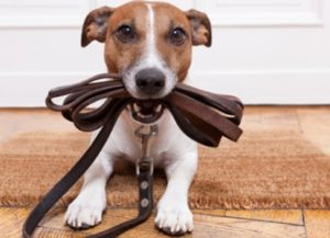 dog shock collars off leash k9 training