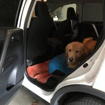 Dog Training Tips Teaching Thresholds