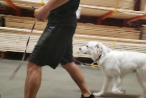 dog training at the home depot