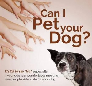 advocate for your dog